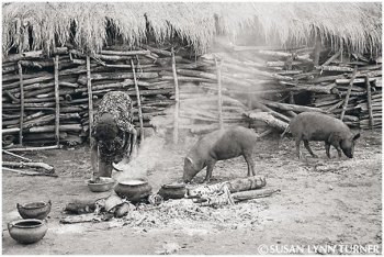 Cooking and Village Pigs