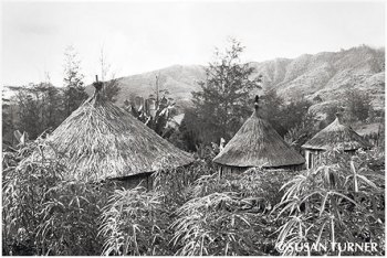 New Traditional Houses