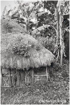 An Old Haus Kunai