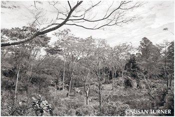 Gardens in the Upper Asaro
