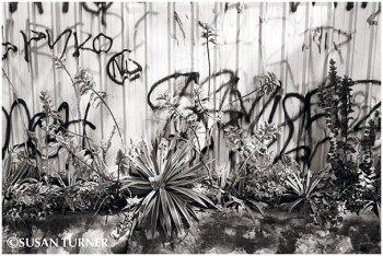 Graffiti with Plants