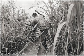 Justinus Poling through Tall Grass