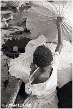A Boazi Girl Gathering Lotus Leaves