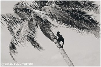 Climbing for Green Coconuts